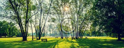 Plakat słoneczny letni park z drzewami i trawa zielona