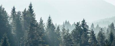 Plakat Sosna drzewa las stylizowane sylwetka tło transparent