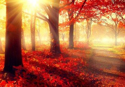 Plakat Spadek scena. Piękny jesienny park w słońcu