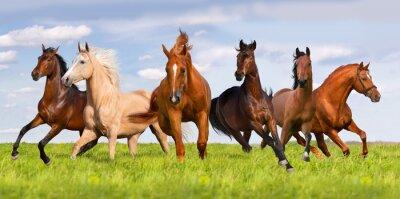 Plakat Stado koni prowadzony w pięknej zielonej łące