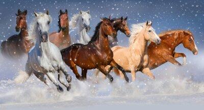 Plakat Stado koni szybko biegać w zimie polu śnieg