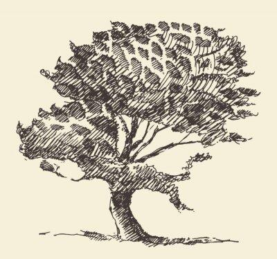 Plakat Stare drzewo rocznika ilustracji ręcznie narysowanego szkic
