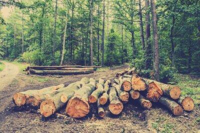 Plakat Stos drewna w lesie przy drodze, archiwalne zdjęcia.
