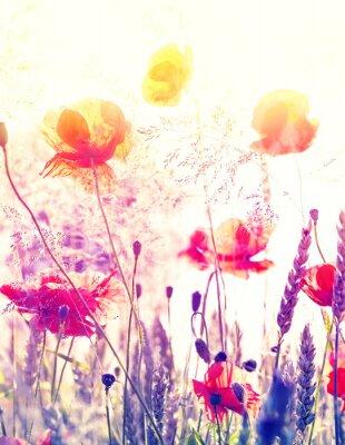 Plakat Streszczenie niewyraźne tło natura, lato łąka o wschodzie słońca.