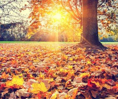 Plakat Sunny liści jesienią