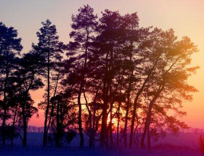 Plakat sylwetki drzew sosnowych