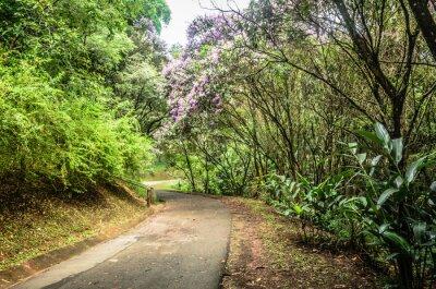 Plakat szlak entre Arvores em um Parque em São Paulo