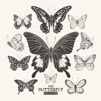 Plakat The Vintage Butterfly Collection