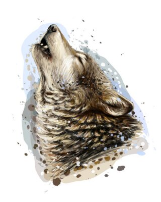 Plakat The wolf howls. Sketchy, graphical, color portrait of a wolf head on a white background with splashes of watercolor.
