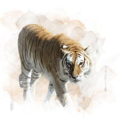 Plakat Tiger Walking