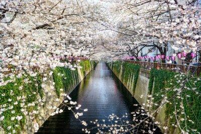 Plakat Tokio, Japonia w Meguro kanał na wiosnę.