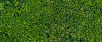 Plakat top view on the forest panoramic