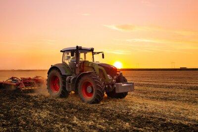 Plakat Traktor na polu jęczmienia o zachodzie słońca.