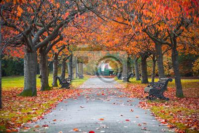 Plakat Tree lined autumn scene in Greenwich park, London