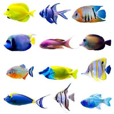 Plakat Tropical fish collection