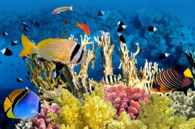 Plakat Tropical Fish i Coral Reef