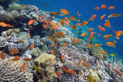 Plakat Tropikalna ryba na rafie koralowej