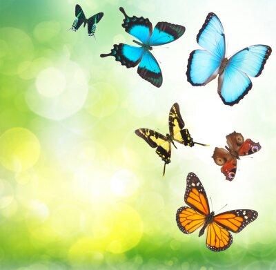 Plakat Tropikalne motyle w ogrodzie