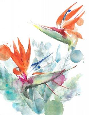 Plakat Tropikalny kwiatu ptak raju strelitzia akwareli obrazu ilustracja odizolowywająca na białym tle