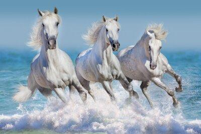 Plakat Trzy biały koń prowadzony galop w fale w oceanie