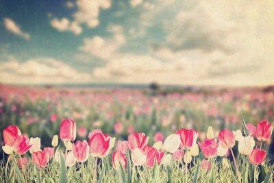 Plakat Tulipan kwiaty polne rocznika