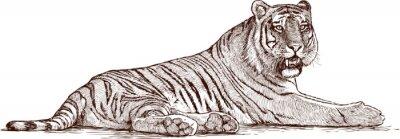 Plakat Tygrys leżący
