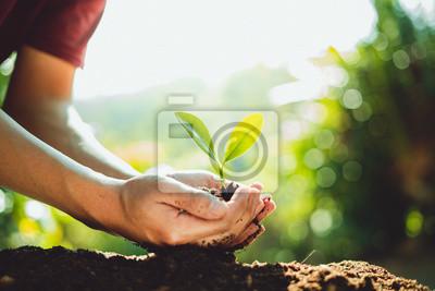 Plakat Uprawa świeżych zielonych roślin, kroki w przyrodzie i piękne poranne oświetlenie