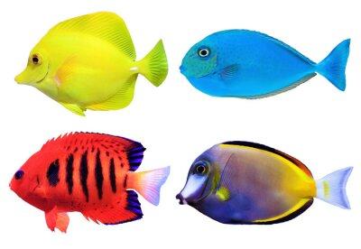 Plakat Ustaw tropikalnych morskich fishs