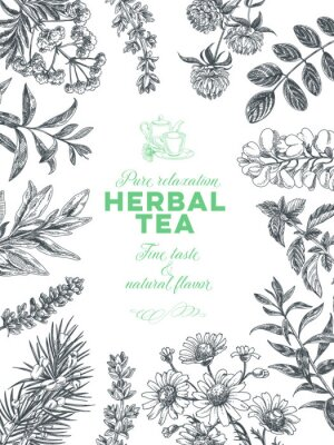 Plakat Vector hand drawn tea herb Illustration.
