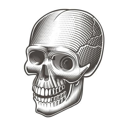 Vector illustration of a black and white skull