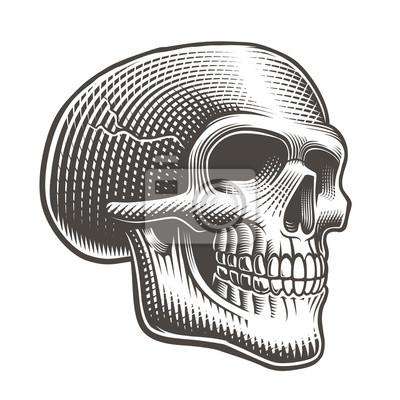 Vector illustration of a skull profile