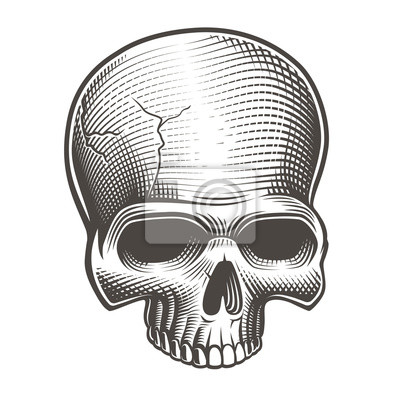 Vector illustration of part of the skull
