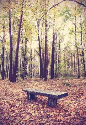 Plakat Vintage filtrowany obraz ławce w lesie.