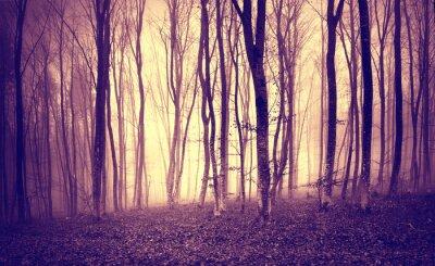 Plakat Vintage fioletowy żółty kolorze Mystic Światło w przerażającym krajobrazie leśnym.