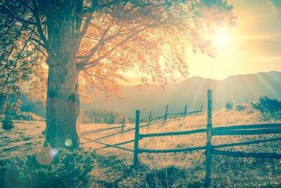 Plakat Vintage jesienią drzewa na zachodzie słońca z promieni słonecznych, góry