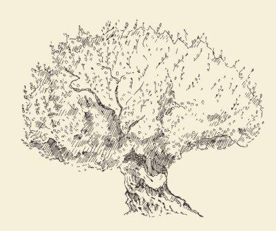 Plakat Vintage oliwek tła Ręcznie rysowane ilustracji