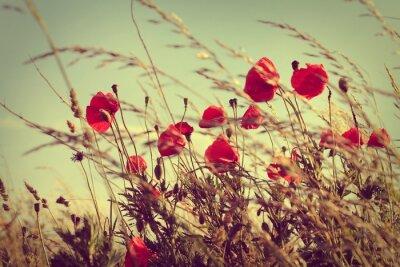 Plakat vintage wild poppies