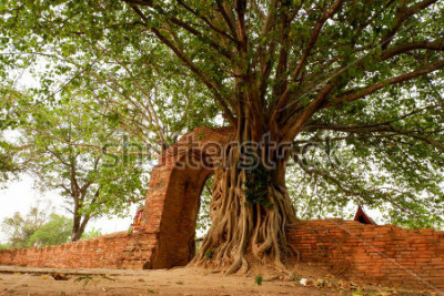 Plakat Wat Phra Ngam (opuszczony) Ayutthaya Gate of Time Arch jest otoczony przez pho.