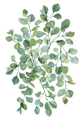 Plakat Watercolor banner background with hand painted silver dollar eucalyptus. Green branches and leaves isolated.  Floral illustration for wedding inspiration card, template, print.