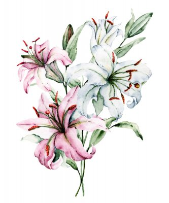 Plakat Watercolor flowers lilies. Floral bouquet, clip art. Arrangement with lily perfectly for printing design on invitations, cards, wall art and other. Isolated on white. Hand painted.