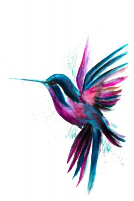 Plakat Watercolor Hummingbird flying and isolated on white background. Rainbow bird. Tropical colibri watercolor illustration.