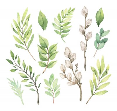 Plakat Watercolor illustrations with eucalyptus, green leaves and willow. Easter brunches. Spring greenery design elements. Perfect for cards, invitations, banners, posters.