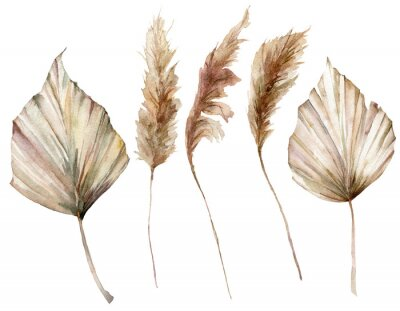 Plakat Watercolor tropical set with dry palm leaves and pampas grass. Hand painted exotic leaves isolated on white background. Floral illustration for design, print, fabric or background.