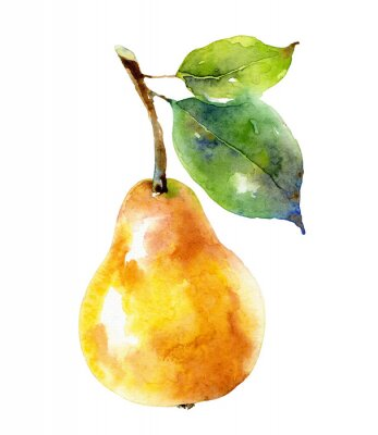 Plakat Watercolor yellow pear isolated on white background