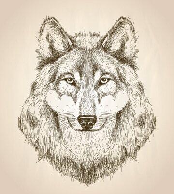 Plakat Wektor szkic ilustracja widok z przodu głowy wilka.