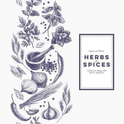 Plakat Wektor tła z ręcznie rysowane ziół i przypraw.