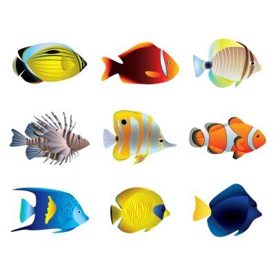 Plakat Wektor zestaw ryby tropikalne