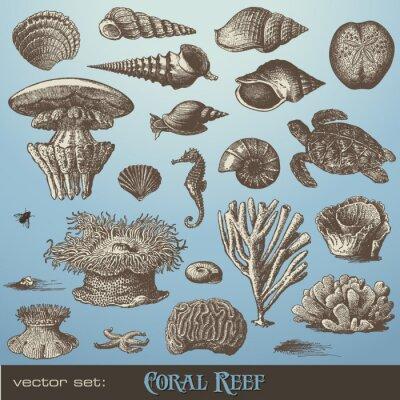 Plakat wektorowa zestaw: rafa koralowa - różnorodność elementów projektu na morze