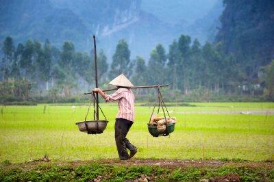 Plakat Wietnamski rolnik na polu ryżu niełuskanego w Ninh Binh, Tam Coc. Rolnictwo ekologiczne w Azji