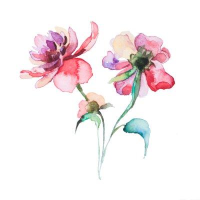 Plakat Wiosenne kwiaty Akwarele samodzielnie na białym tle
